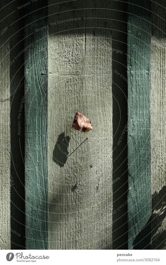 verloren | letztes blatt Natur Herbst Winter Schönes Wetter Blatt Haus Hütte Mauer Wand Fassade Holz authentisch einfach trocken Einsamkeit einzeln hängen