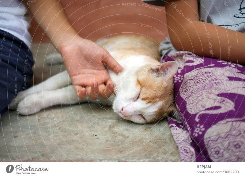 Katze Frau Mensch Hand Erholung Tier Freude Gesicht Erwachsene gelb Liebe natürlich Glück klein Spielen grau