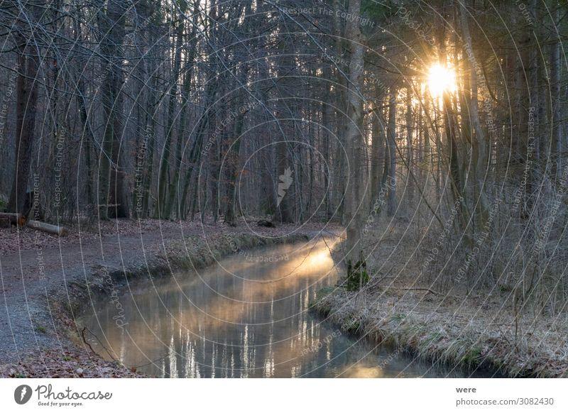 sunrise over a forest road at a stream Natur Wasser kalt Bach frieren Erwartung