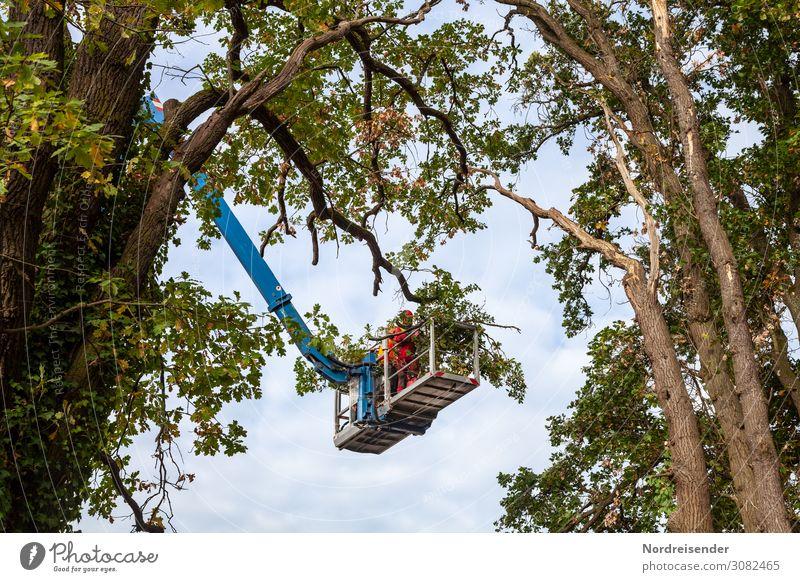 Baumpflege Arbeit & Erwerbstätigkeit Beruf Arbeitsplatz Wirtschaft Landwirtschaft Forstwirtschaft Güterverkehr & Logistik Dienstleistungsgewerbe Werkzeug