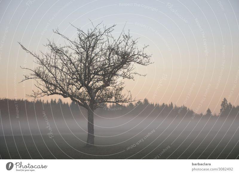 Novemberstimmung Landschaft Pflanze Urelemente Sonne Herbst Schönes Wetter Nebel Baum Wiese Wald ästhetisch hell kalt Stimmung Sehnsucht Gefühle Hoffnung Klima