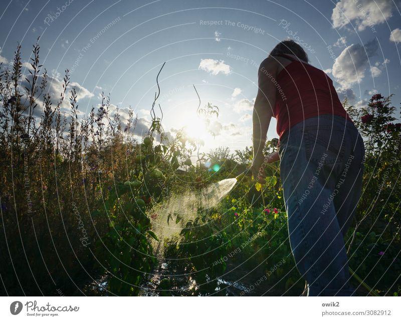 Ein Abwasch Frau Mensch Himmel Natur Sommer Pflanze Wasser Landschaft Sonne Blume Wolken ruhig Erwachsene Umwelt Garten Arbeit & Erwerbstätigkeit