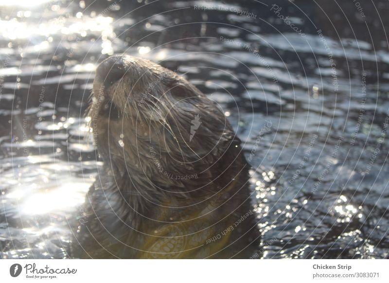 Natur Meer Tier Leben natürlich klein wild nass Fluss Säugetier Zoo Norden Aquarium Kalifornien Pazifik Fleischfresser