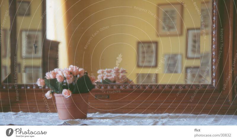 Der Spiegel Blume Rose Perspektive Bild Häusliches Leben Italien antik Toskana Ambiente Blumentopf