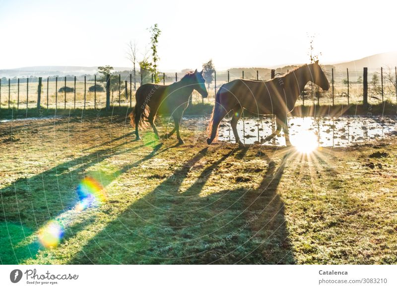 Früh morgens Natur Landschaft Luft Wasser Himmel Horizont Herbst Schönes Wetter Pflanze Baum Gras Wiese Weide Pferd 2 Tier Zaun Weidezaun gehen authentisch
