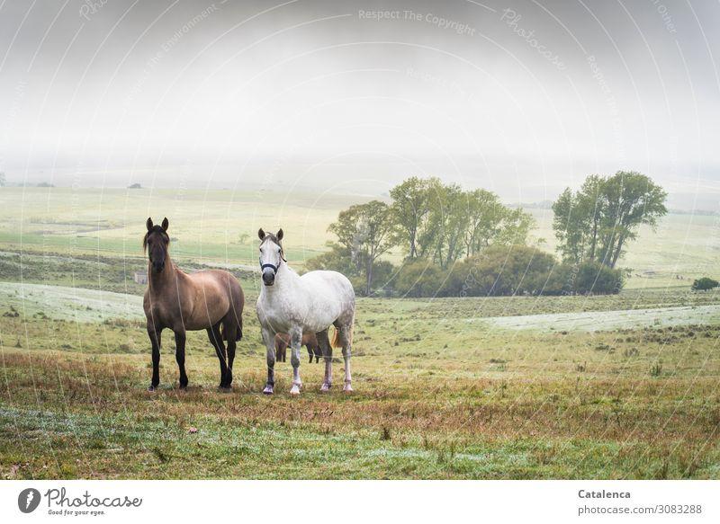 Wertvoll | Freundschaft Natur Landschaft Pflanze Tier Himmel Sommer schlechtes Wetter Nebel Baum Gras Sträucher Wiese Hügel Weide Pampa Steppe Nutztier Pferd 2