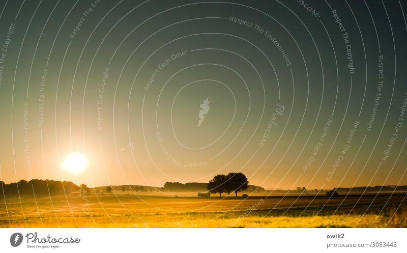 Weiterfahren Umwelt Natur Landschaft Wolkenloser Himmel Sonne Herbst Schönes Wetter Baum Feld leuchten frisch glänzend hell Fernweh Idylle Ferne unterwegs