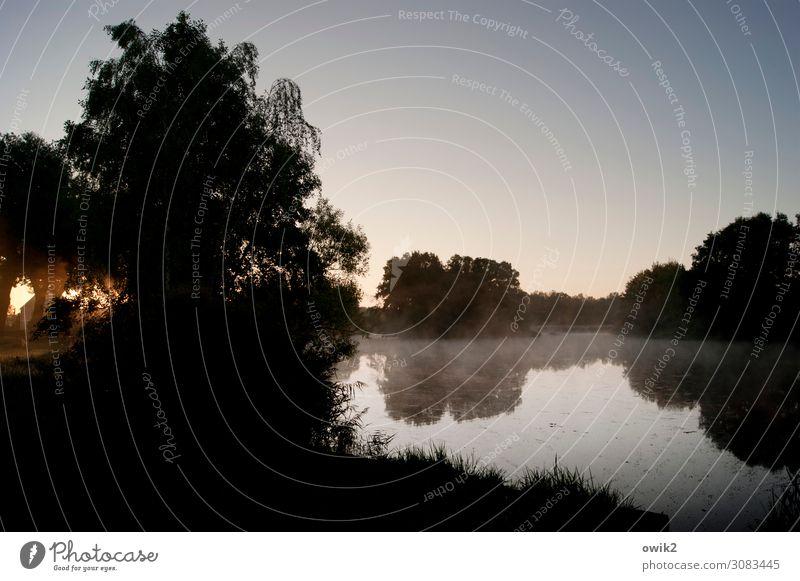 Morgens, windstill Umwelt Natur Landschaft Wasser Wolkenloser Himmel Horizont Herbst Schönes Wetter Baum Gras Seeufer Teich leuchten ruhig Idylle Ferne