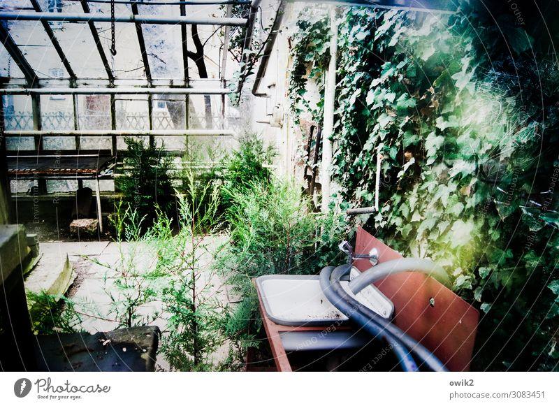 Alter Garten Frühling Pflanze Sträucher Efeu Fenster Gewächshaus Gärtnerei Waschbecken Schlauch Glas Metall Kunststoff alt Verfall Vergangenheit Vergänglichkeit