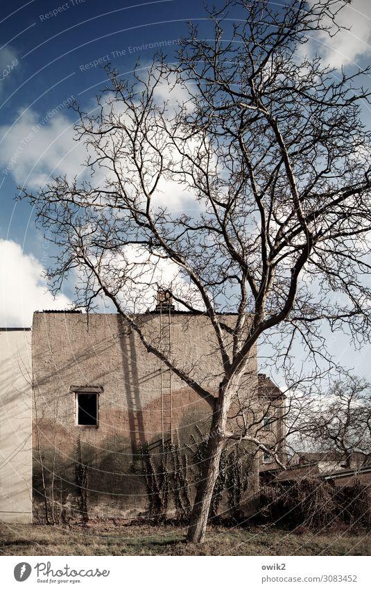 Falkenberg, mon amour Himmel Wolken Schönes Wetter Baum Gras Sträucher Garten Brandenburg Deutschland Kleinstadt Stadtzentrum Haus Ruine Mauer Wand Fassade