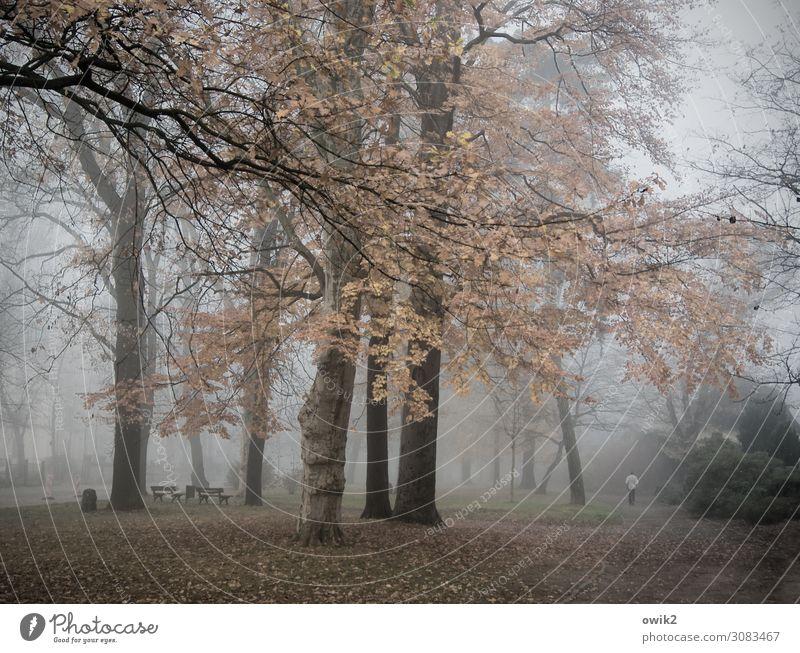 Suppentag Umwelt Natur Landschaft Pflanze Herbst Nebel Baum Gras Sträucher Park Wege & Pfade ruhig demütig Traurigkeit Sorge Sehnsucht Fernweh Idylle Trauer