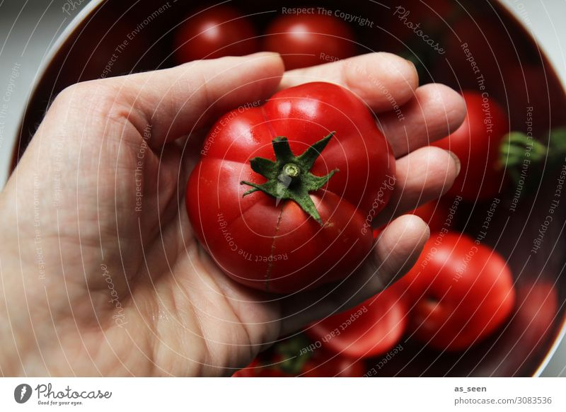 Tomatenernte Lebensmittel Gemüse Ernährung Essen Büffet Brunch Bioprodukte Vegetarische Ernährung Diät Italienische Küche Hand Umwelt Natur Pflanze Nutzpflanze