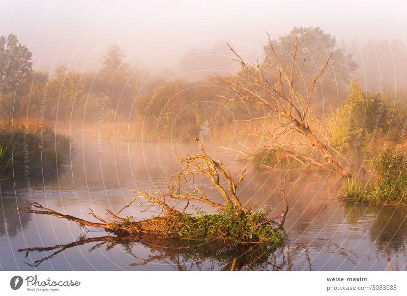 Alte trockene Eichen, die im Wasser liegen. Herbstlicher nebliger ländlicher Sonnenaufgang schön Ferien & Urlaub & Reisen Tourismus Ausflug Abenteuer Ferne