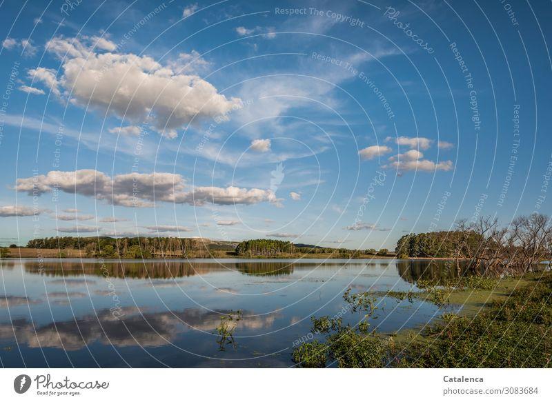 Nachmittags am See Umwelt Natur Landschaft Pflanze Wasser Himmel Wolken Sommer Schönes Wetter Baum Gras Sträucher Wasserpflanze Eukalyptusbaum Weide Seeufer