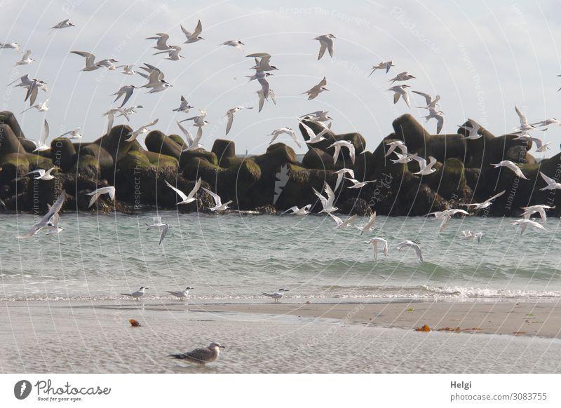Seeschwalben Himmel Natur Sommer Wasser weiß Tier Strand Leben Umwelt natürlich Bewegung Freiheit Vogel Zusammensein braun fliegen