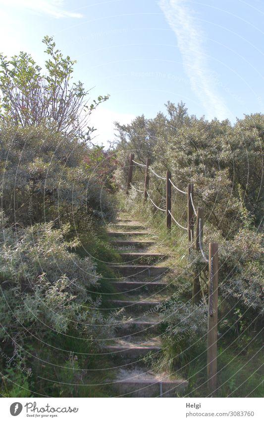 Weg mit einer hölzernen Treppe und Geländer  zwischen Sträuchern in den Dünen Umwelt Natur Landschaft Pflanze Himmel Sonnenlicht Sommer Schönes Wetter Gras