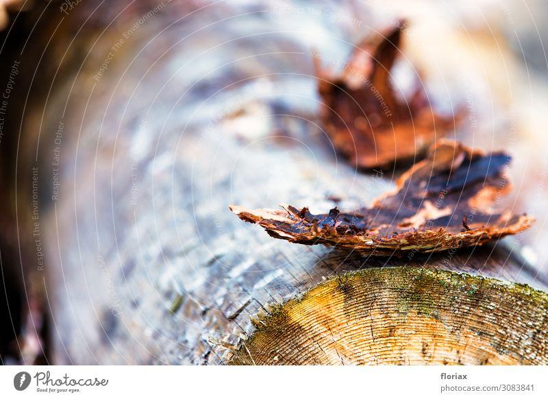 Heideholz II/V harmonisch Ferien & Urlaub & Reisen Ausflug Abenteuer wandern Umwelt Natur Landschaft Pflanze Herbst Klima Baum Holz liegen nachhaltig braun