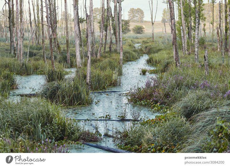 Sumpflandschaft, Feld, Bäume und Gras, die mit Wasser überflutet sind. Ferien & Urlaub & Reisen Sommer Umwelt Natur Landschaft Pflanze Himmel Baum Sträucher