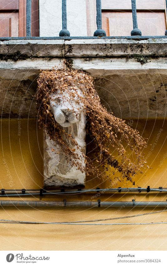 Venezian Wildlife Venedig Balkon Glück Fröhlichkeit Zufriedenheit Lebensfreude Tapferkeit Kraft Tierliebe ästhetisch Kunst Natur Perspektive Tourismus Wachstum
