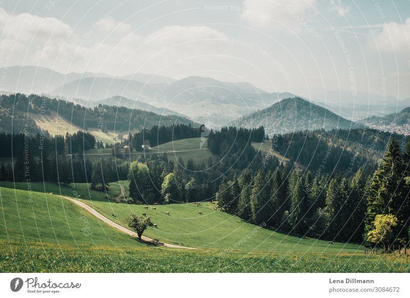 201909 Berg #6 Umwelt Natur Landschaft Tier Himmel Wolken Sonnenlicht Frühling Sommer Schönes Wetter Baum Gras Hügel Alpen Berge u. Gebirge Kalzhofen