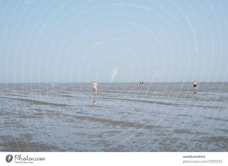Wattwandern bei Ebbe in Cuxhaven Lifestyle Erholung Freizeit & Hobby Ferien & Urlaub & Reisen Tourismus Sommer Sommerurlaub Strand Meer Mensch Erwachsene