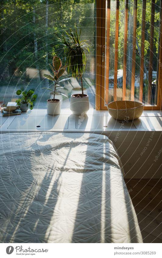 Schlafzimmer mit Pflanzen im Abendsonnenlicht Ferien & Urlaub & Reisen schön Erholung ruhig Lifestyle Innenarchitektur Stil Stimmung Häusliches Leben Design