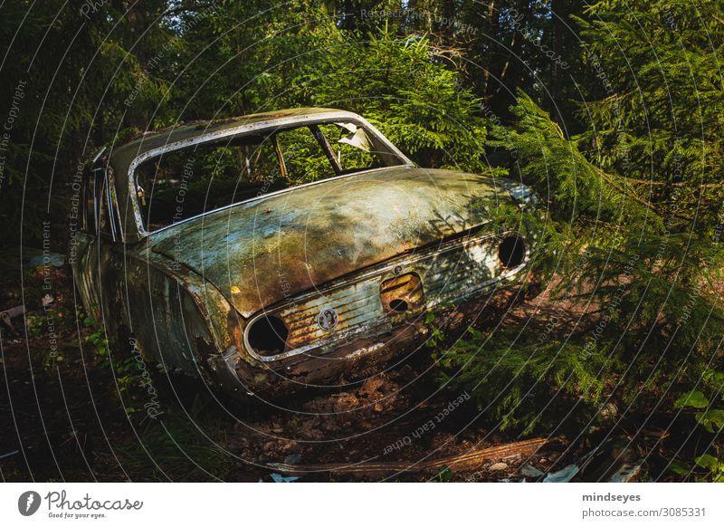 Autofriedhof im Wald Ferien & Urlaub & Reisen Umwelt Natur Nadelbaum alt dreckig historisch kaputt Traurigkeit Einsamkeit Dekadenz Endzeitstimmung entdecken