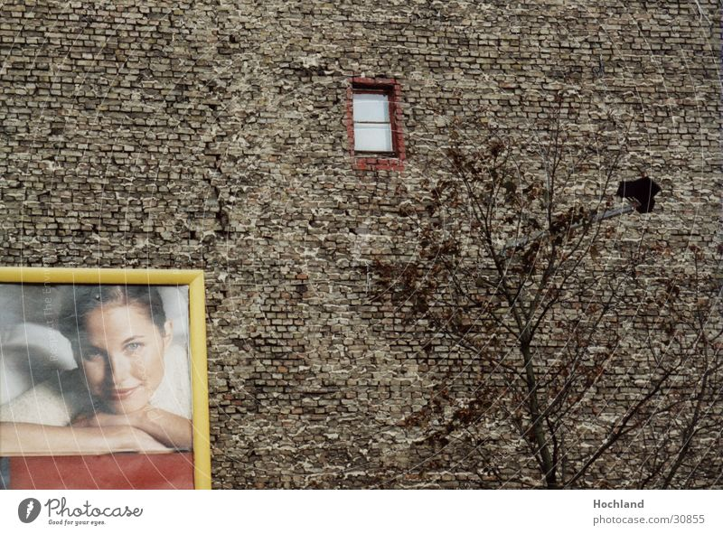 Zieglwand in Berlin Frau Baum Wand Fenster Architektur Werbung Backstein Backsteinwand