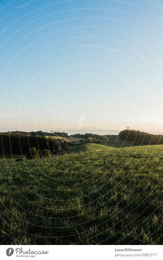 Allgäu #2 Umwelt Natur Landschaft Tier Himmel Wolkenloser Himmel Horizont Sonnenaufgang Sonnenuntergang Sonnenlicht Frühling Sommer Herbst Schönes Wetter Gras