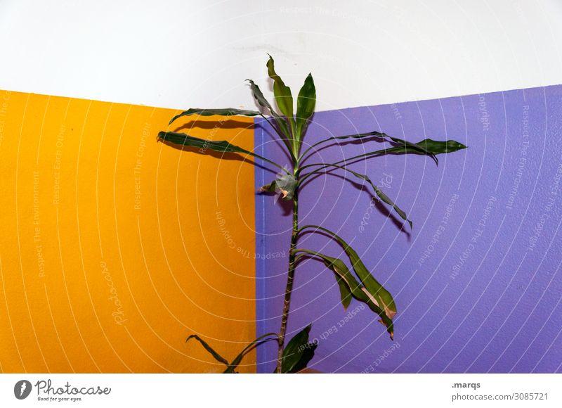 Pflanze Grünpflanze Gummibaum Mauer Wand trashig violett orange weiß Farbe nachhaltig Farbfoto Innenaufnahme Menschenleer Textfreiraum links Textfreiraum rechts