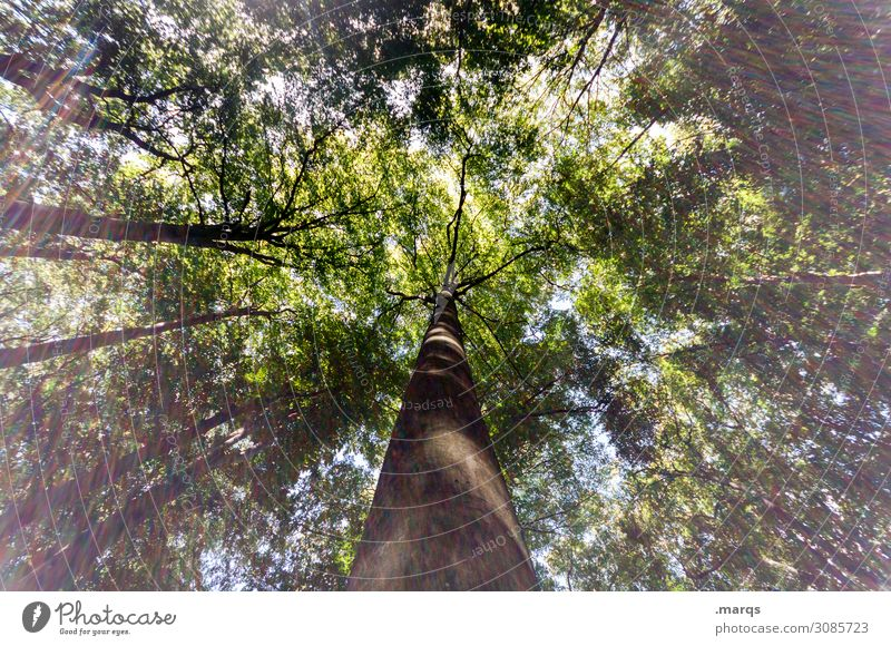 Baum Wald Perspektive Natur Tag Froschperspektive Himmel Wachstum hoch grün Landschaft Umwelt Licht Forstwirtschaft Baumstamm Lichterscheinung Sonnenlicht