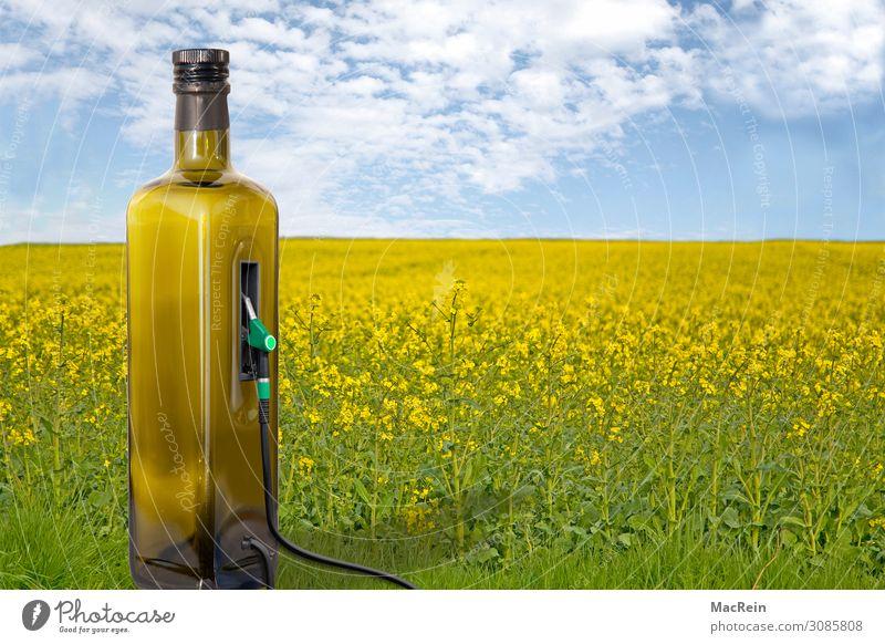 Erneuerbare Energie Getreide Flasche Landwirtschaft Forstwirtschaft Energiewirtschaft Natur Pflanze Feld nachhaltig gelb Krise Umweltschutz Benzin
