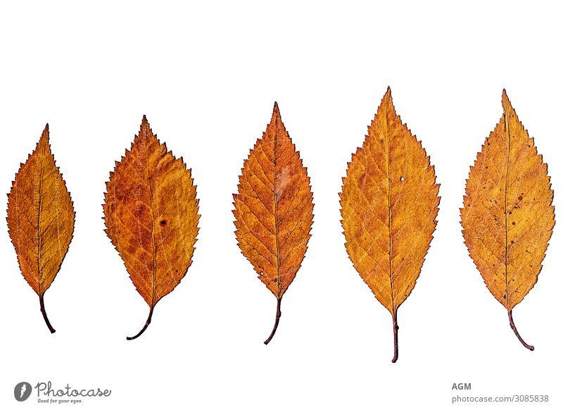 Herbst Natur alt Pflanze Farbe schön weiß Blatt ruhig Winter Hintergrundbild gelb Senior orange Stimmung Dekoration & Verzierung
