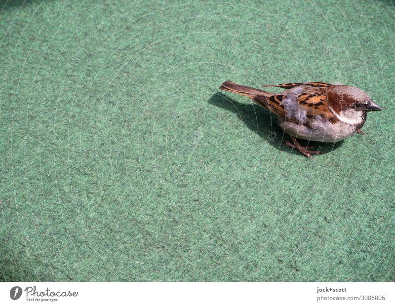 grüne Lebensweise kleiner Vogel Prenzlauer Berg Meisen 1 Teppich Kunststoff Neugier niedlich unten Wachsamkeit Umwelt Vertrauen Wandel & Veränderung Lebensraum