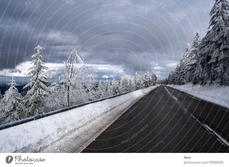 Schnee und eisfrei l on the road again Wald Verkehr Autofahren Straße Wege & Pfade Beginn Farbfoto Außenaufnahme Menschenleer Textfreiraum oben
