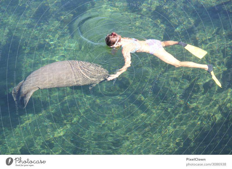 Manatee Lifestyle Tourismus Abenteuer Freiheit Safari Sommerurlaub Meer Schwimmen & Baden tauchen Mensch Junge Frau Jugendliche Körper 1 18-30 Jahre Erwachsene