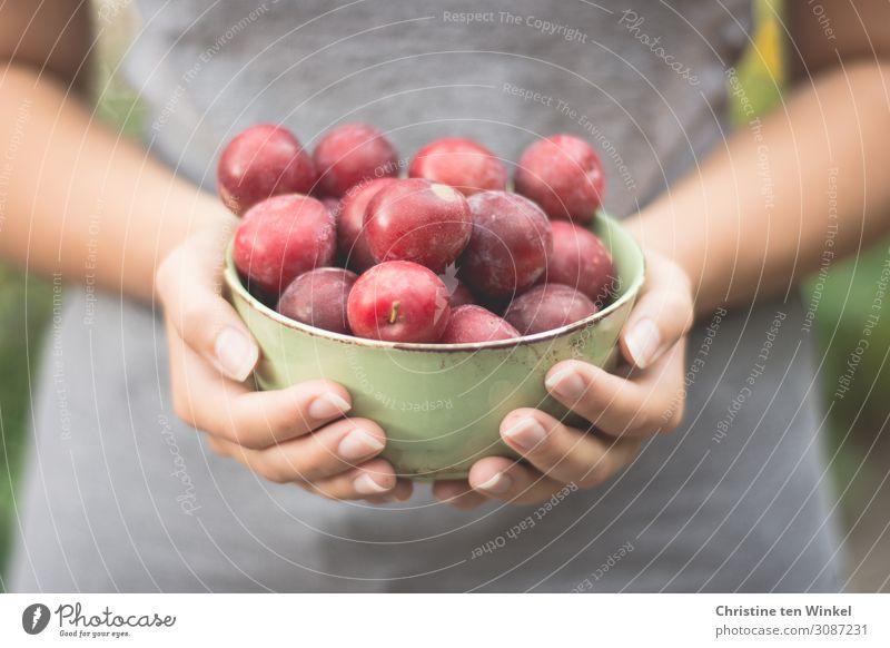 Junge Frau hält eine Schale mit roten Pflaumen vor sich in den Händen Lebensmittel Frucht Ernährung Schalen & Schüsseln Jugendliche Arme Hand Finger 1 Mensch
