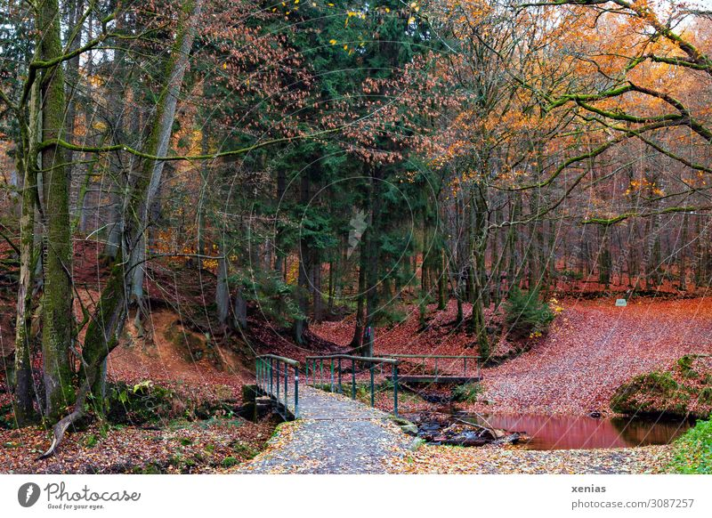 Herbstwald mit Brücke Natur Landschaft Klima Baum Blatt Wald Bach Bergisches Land Eifgenbach Menschenleer Holzbrücke Wege & Pfade natürlich gelb grün rot