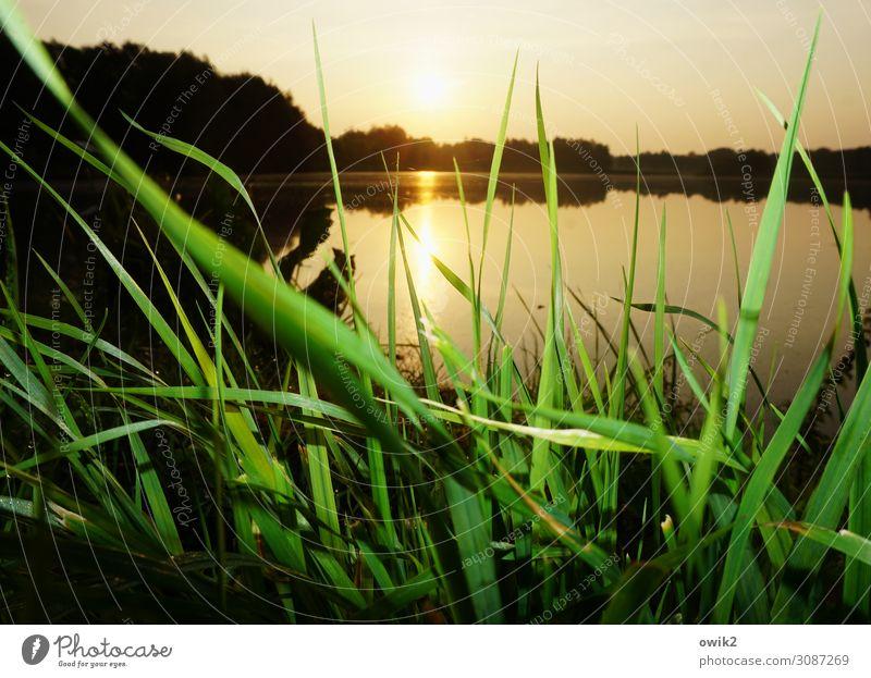 Seegras Umwelt Natur Landschaft Pflanze Wasser Horizont Sonne Sommer Schönes Wetter Gras Wiese Seeufer leuchten unten Windstille ruhig Ferne friedlich nah