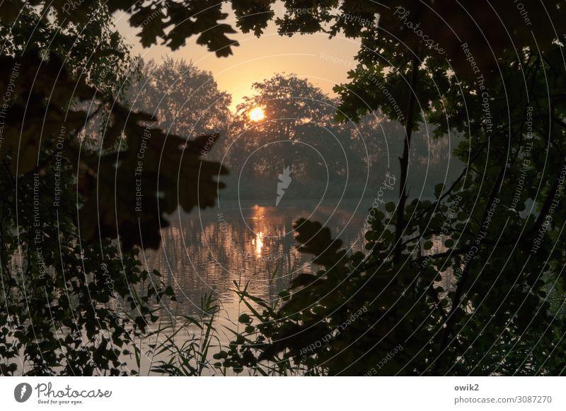 Schmachtnudel Umwelt Natur Landschaft Pflanze Luft Wasser Wolkenloser Himmel Horizont Sonne Herbst Schönes Wetter Baum Zweige u. Äste Blatt Laubbaum Wald