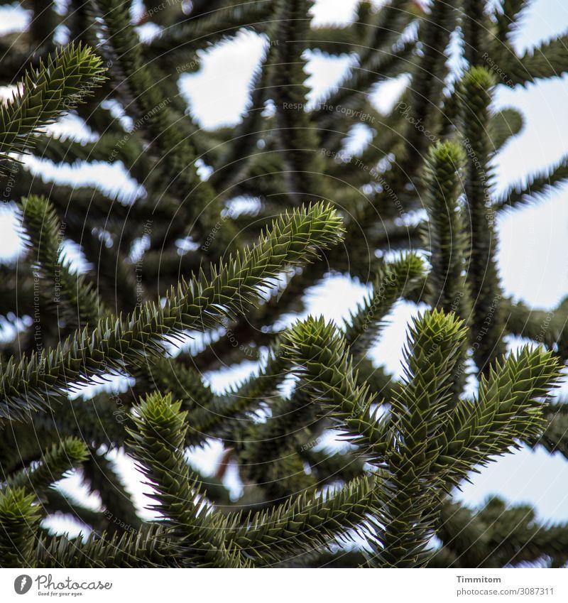 Fingerspitzengefühl | testen Himmel Pflanze blau grün Baum Umwelt natürlich Gefühle Garten Aggression stachelig