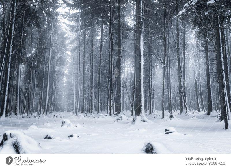 Winterliche Waldlandschaft. Verschneite Bäume. Schnee wandern Weihnachten & Advent Natur Landschaft Nebel Eis Frost Schneefall Baum Park träumen blau