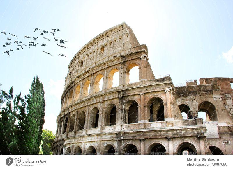 Nahaufnahme des Römischen Kolosseums in Rom, Italien Ferien & Urlaub & Reisen Stadion Theater Kultur Himmel Ruine Gebäude Architektur Denkmal Stein alt