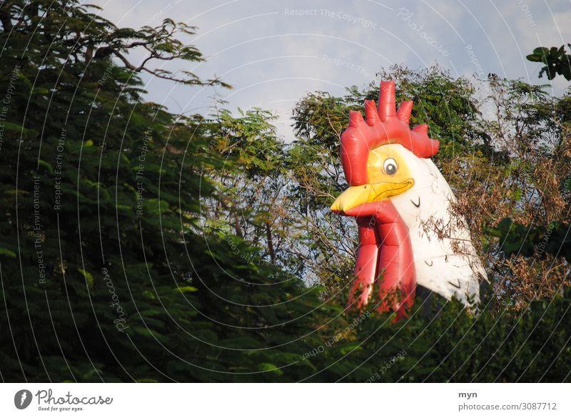 Kopf von Huhn bzw. Hahn zwischen Bäumen Hühnchen Hahnenkamm Haushuhn Wald Ei Vogel Tier Außenaufnahme Natur Geflügel Freilandhaltung freilaufend Tierhaltung