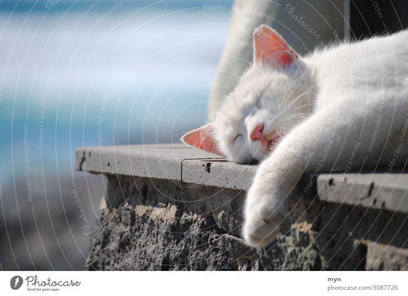 Relax Katze Ferien & Urlaub & Reisen Sommer Sonne Meer Erholung Tier ruhig Glück Freiheit Zufriedenheit liegen Lebensfreude schlafen Wellness Wohlgefühl