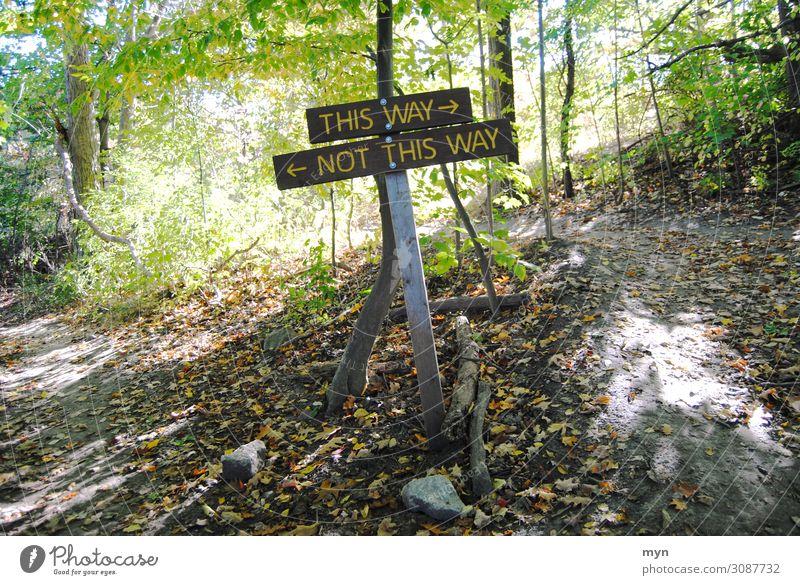 Wegweiser Sport Baum Park Wald Urwald Berge u. Gebirge Verkehr Verkehrswege Fahrradfahren Fußgänger Straßenkreuzung Wege & Pfade Wegkreuzung Verkehrszeichen