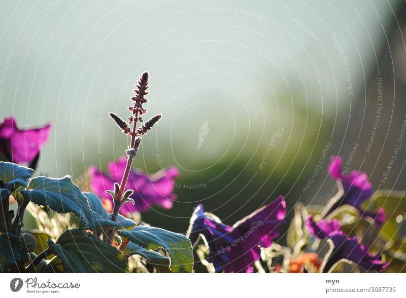 Am Morgen Natur Sommer Pflanze schön Blume Hintergrundbild Leben Blüte Frühling Wiese Glück Garten Zufriedenheit Park ästhetisch stehen
