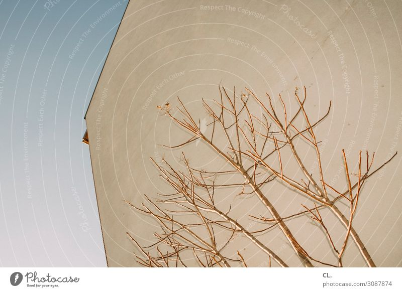 block 1 Wolkenloser Himmel Herbst Winter Schönes Wetter Baum Ast Stadt Menschenleer Haus Gebäude Architektur Mauer Wand ästhetisch eckig karg Farbfoto abstrakt