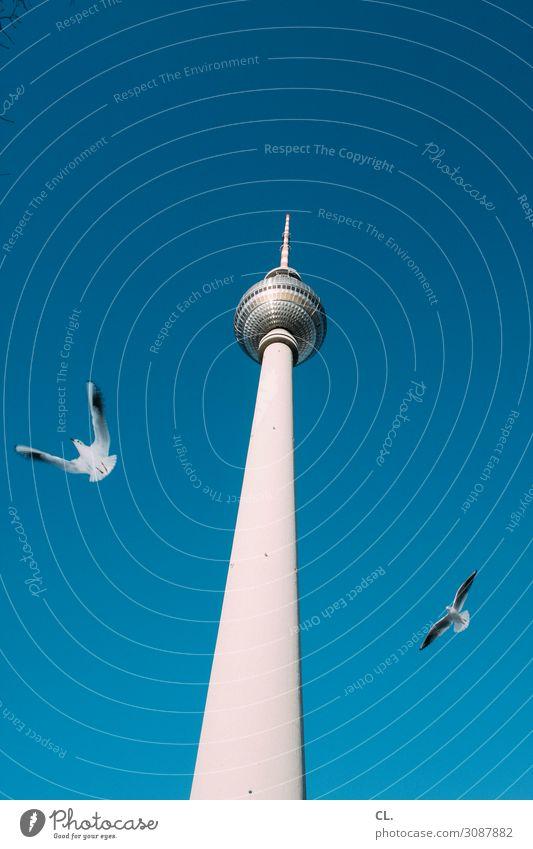 zwei möwen Ferien & Urlaub & Reisen Tourismus Sightseeing Städtereise Sommerurlaub Himmel Wolkenloser Himmel Schönes Wetter Berlin Deutschland Hauptstadt