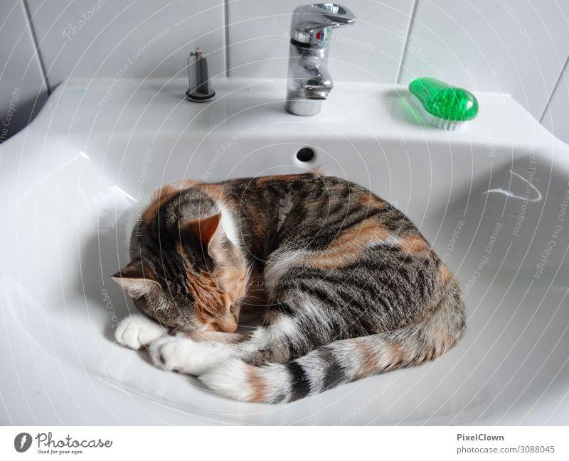 Katzenwäsche schön weiß Tier Freude Gefühle Glück braun Häusliches Leben träumen schlafen Haustier unschuldig